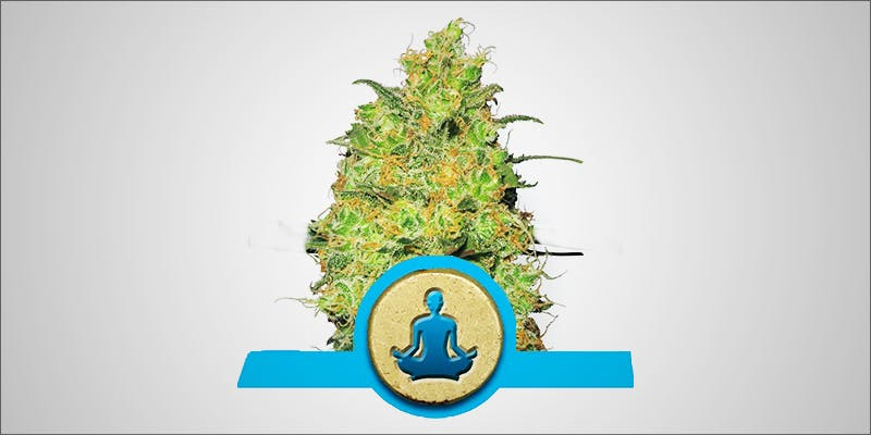 Why Auto Flowering 1 This Machine Grows Weed For You & Sends You A Text When Its Ready