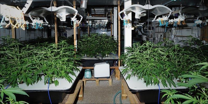1 Million Cannabis 1 Legal Cannabis Sales Are Booming More Than The Dot Com Era