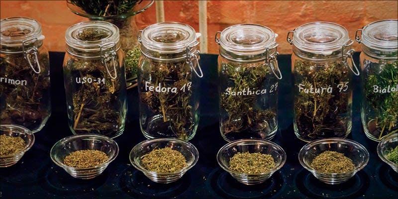 Cannabis vs Cystitis 3new Legal Cannabis Sales Are Booming More Than The Dot Com Era