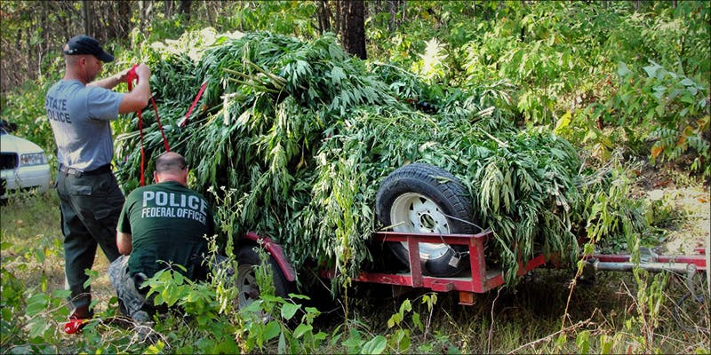 DEA UNDER FIRE 1 Does Weed Make You Stupid?