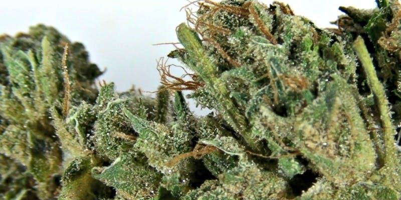 Flowerbomb Kush Weed; Flowerbomb Kush Cannabis Strain; Flowerbomb Kush Indica Marijuana Strain