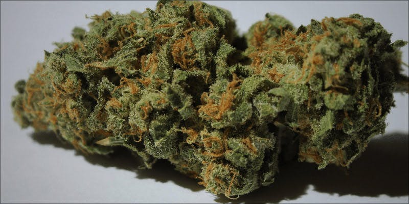 Oregon Pineapple A 1 Raspberry Kush: One Of The Most Popular Indica Hybrids Around