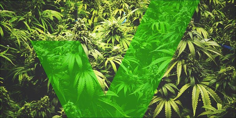 Rhode Island 3 Does Weed Make You Stupid?