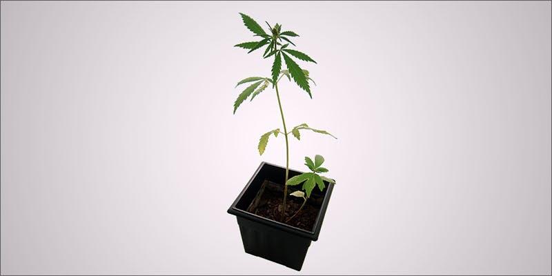 Three Things Cannabis 6 Legal Cannabis Sales Are Booming More Than The Dot Com Era