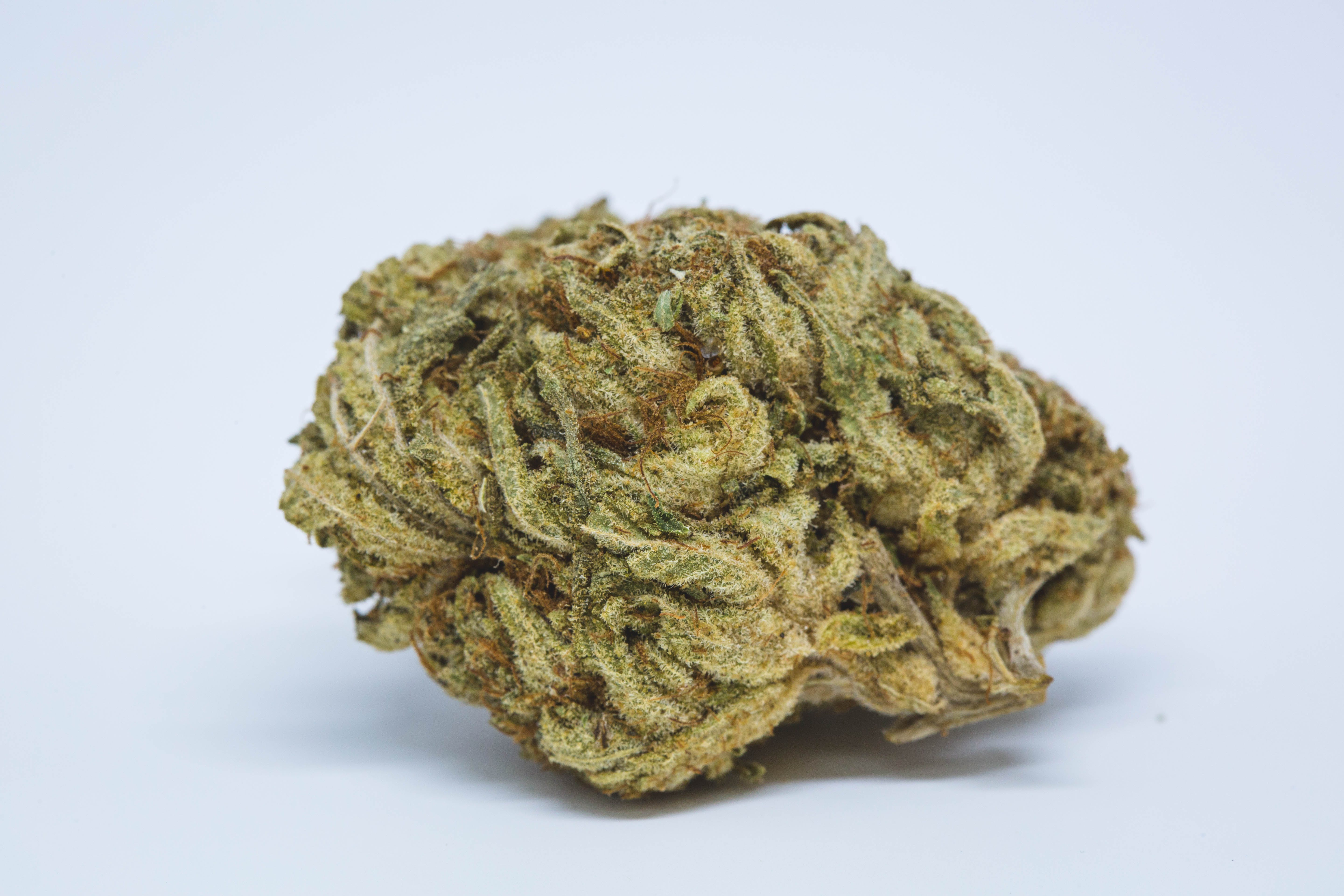 Orange Crush Weed; Orange Crush Cannabis Strain; Orange Crush Hybrid Marijuana Strain