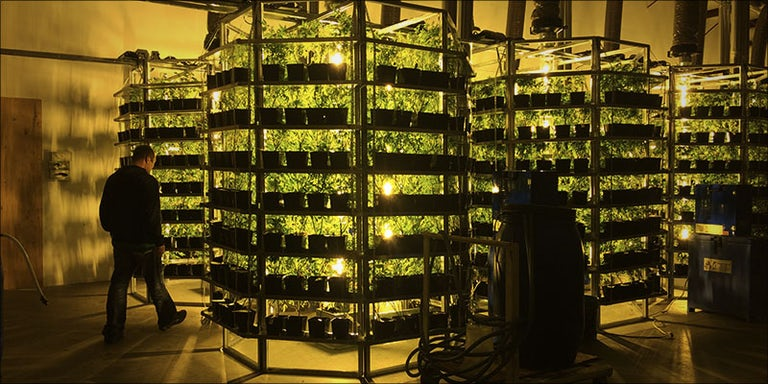 Vertical Farming Is This The Future Of Growing Cannabis