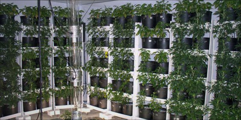 Vertical Farming The 3 Vertical Farming: Is This The Future Of Growing Cannabis?