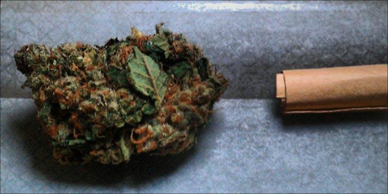 Yoda OG An 1 Legal Cannabis Sales Are Booming More Than The Dot Com Era