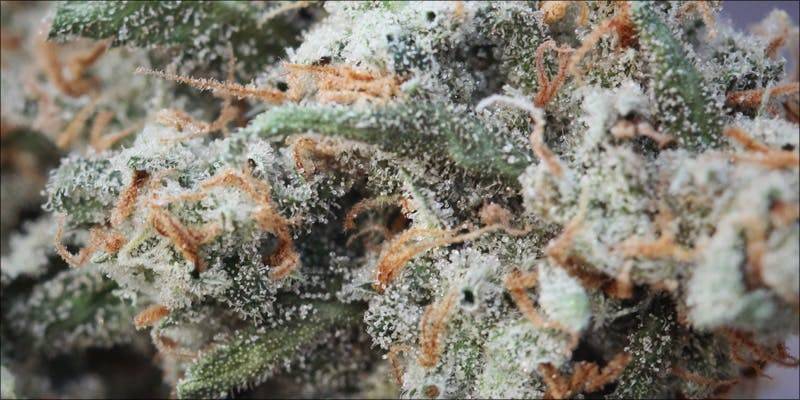 pinene 3 Raspberry Kush: One Of The Most Popular Indica Hybrids Around
