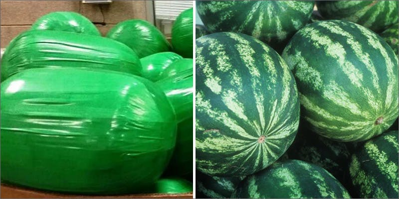 watermelons TSA Accidentally Said Cannabis Is OK On Planes