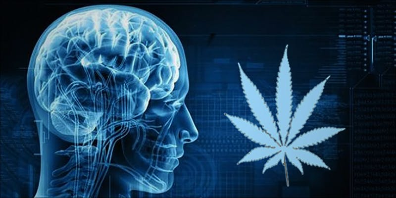 10 Reasons You 4 10 Reasons Why You Should Smoke Weed On The Daily