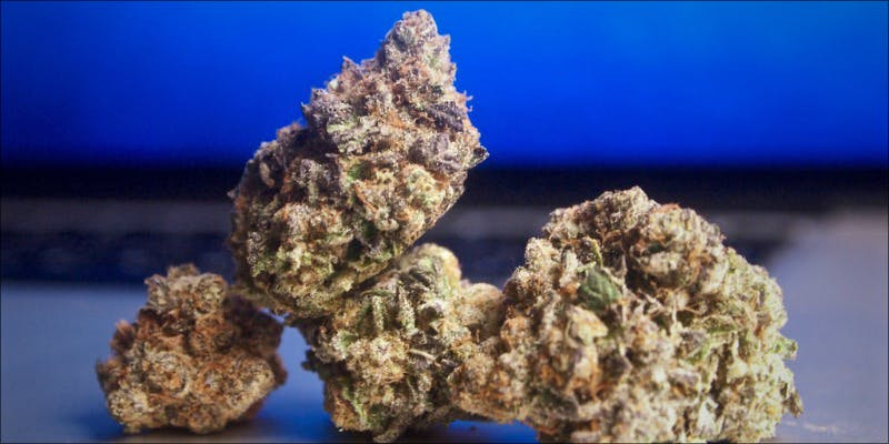 10 Strongest Hybrid 6 10 Strongest Hybrid Strains On Earth Right Now