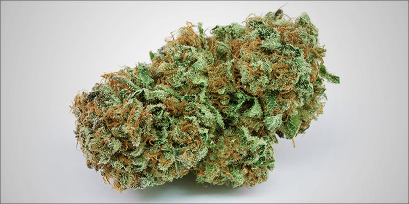 11 Best Clear 5 11 Best Clear Headed Sativa Strains To Help You Concentrate
