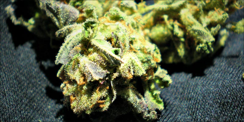 11 Best Clear 6 11 Best Clear Headed Sativa Strains To Help You Concentrate