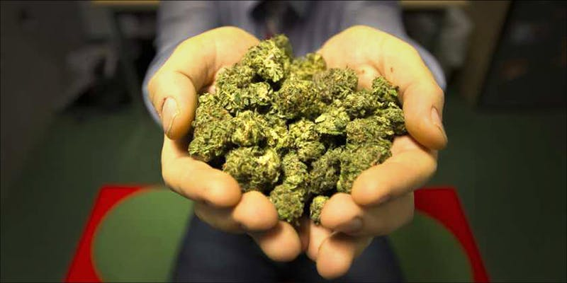 5 Memorable Moments 3 11 Best Clear Headed Sativa Strains To Help You Concentrate