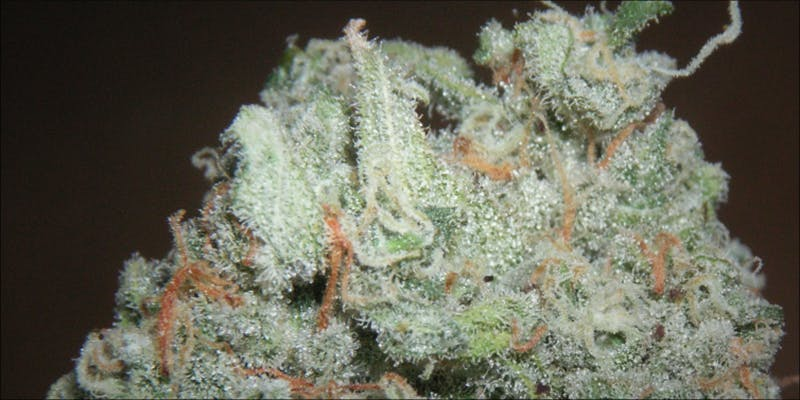 5 Strains For 3 Gelato: This Super Sweet Hybrid Is Potent, Popular And Perfectly Balanced