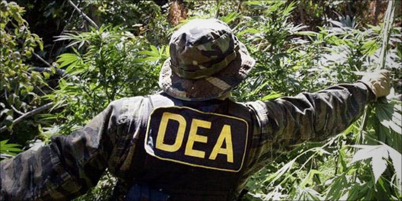 DEA Is Now 2 Heres What Happened When A Bunch Of Pensioners Raided A Pot Shop