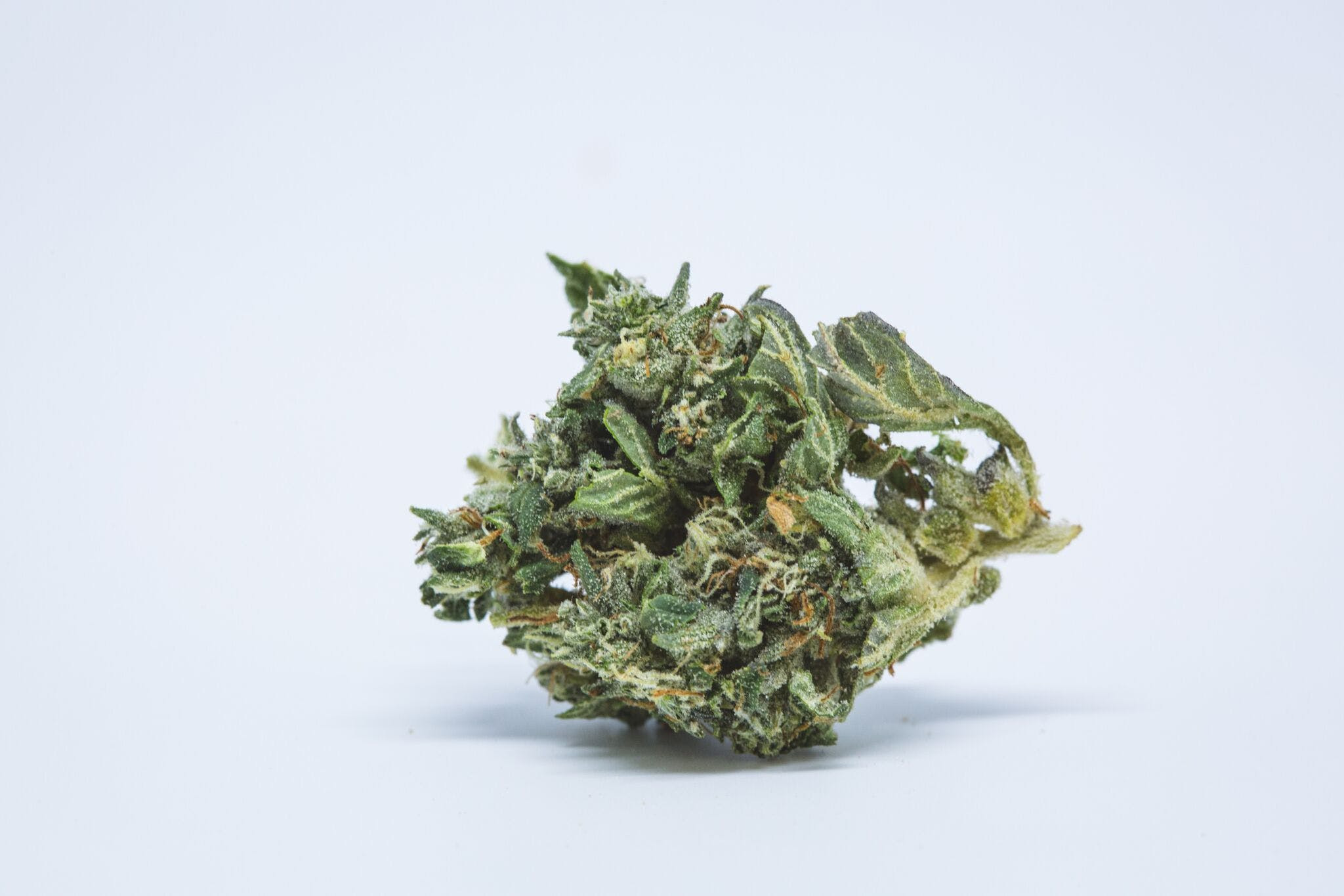 Jack Flash Marijuana Strain