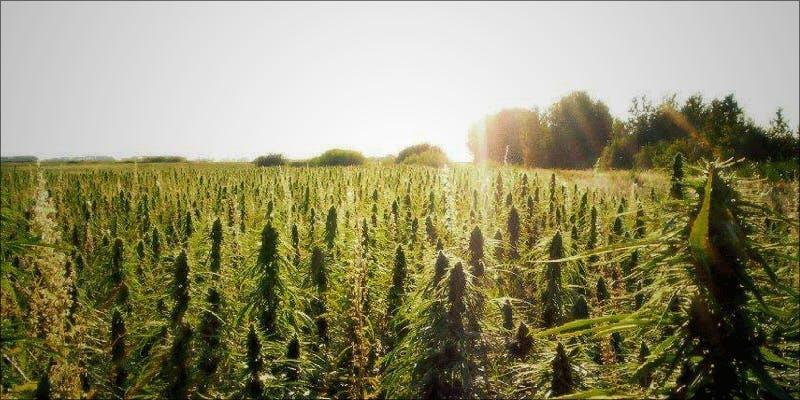 Kentucky tobacco farmers