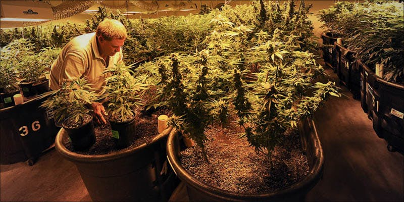 PERUS GOVERNMENT PROPOSES 2 Where Did The Huge Social Stigma On Cannabis Users Come From?