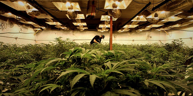 Richard Kirk Case 3 Where Did The Huge Social Stigma On Cannabis Users Come From?