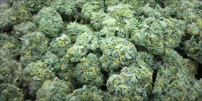 Safer Arizona Looks 1 11 Best Clear Headed Sativa Strains To Help You Concentrate