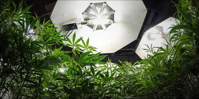 Safer Arizona Looks 2 11 Best Clear Headed Sativa Strains To Help You Concentrate