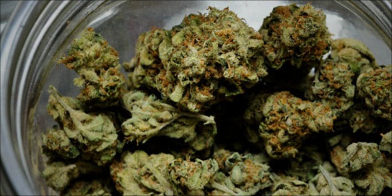 Super Silver Haze 1 Gelato: This Super Sweet Hybrid Is Potent, Popular And Perfectly Balanced