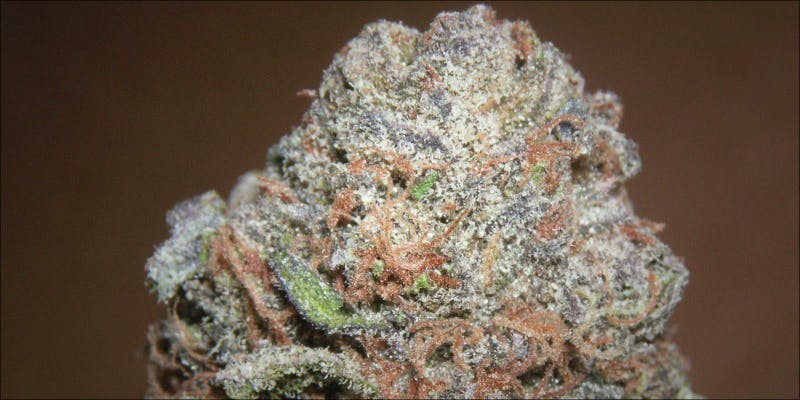 The 10 Strongest 2 Gelato: This Super Sweet Hybrid Is Potent, Popular And Perfectly Balanced