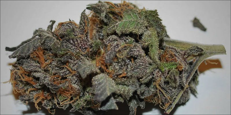 The 10 Strongest 3 Gelato: This Super Sweet Hybrid Is Potent, Popular And Perfectly Balanced