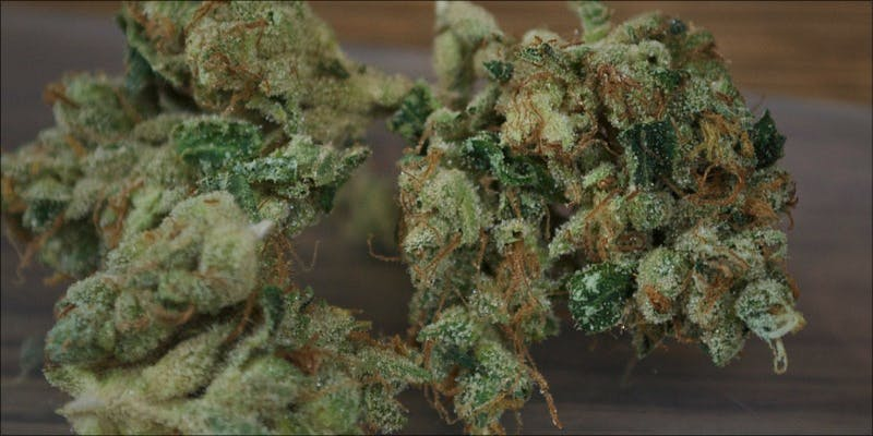The 10 Strongest 6 Gelato: This Super Sweet Hybrid Is Potent, Popular And Perfectly Balanced