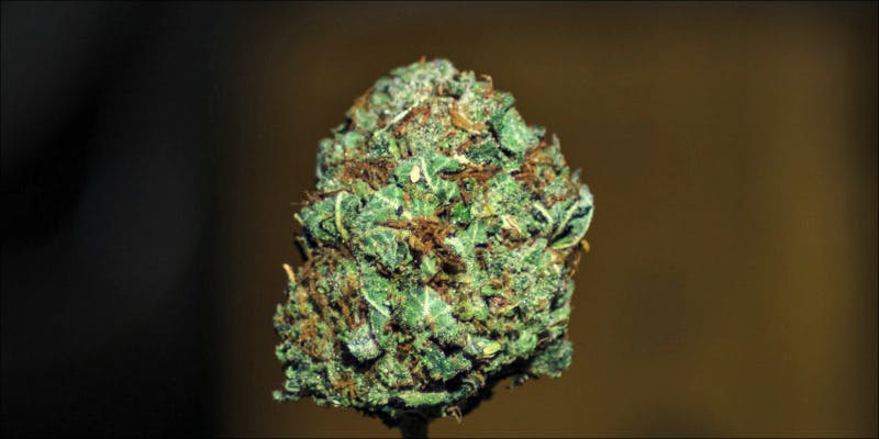 The 10 Strongest 8 Gelato: This Super Sweet Hybrid Is Potent, Popular And Perfectly Balanced