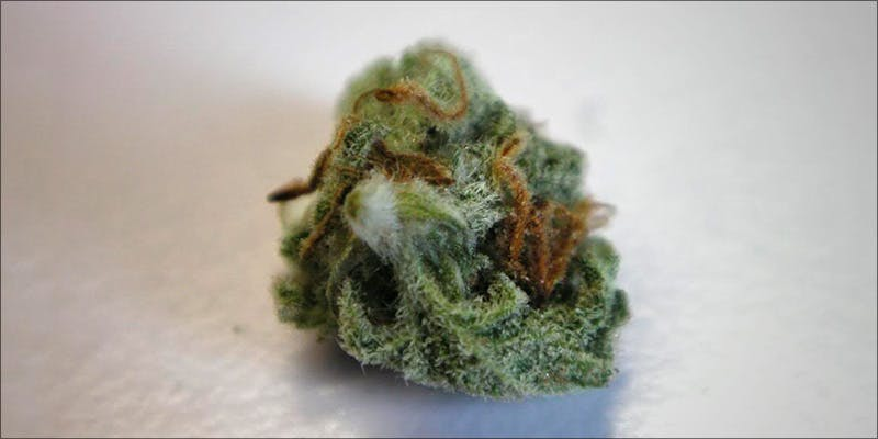 What Does Weed Mold Look Like