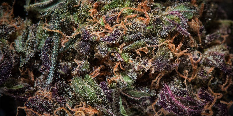What Is Loud 2 11 Best Clear Headed Sativa Strains To Help You Concentrate