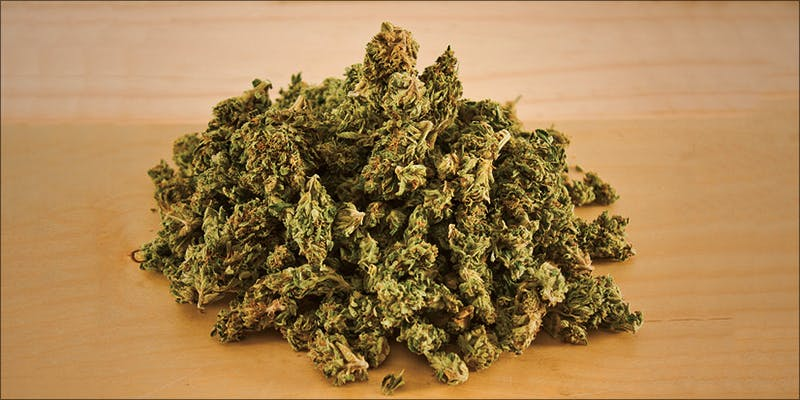 Whole Plant Medicine 3 11 Best Clear Headed Sativa Strains To Help You Concentrate
