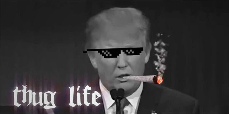 Will Trump Fire 1 11 Best Clear Headed Sativa Strains To Help You Concentrate