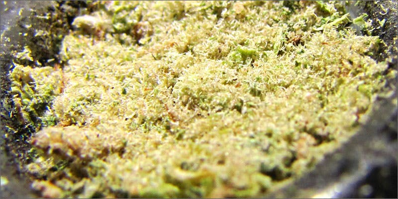 j2 11 Best Clear Headed Sativa Strains To Help You Concentrate