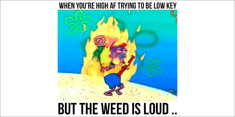 15 Pictures That 5 10 Answers To The Most Commonly Asked Questions About Weed
