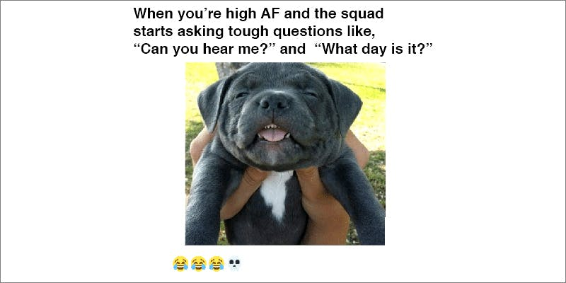 15 Pictures That 9 10 Answers To The Most Commonly Asked Questions About Weed