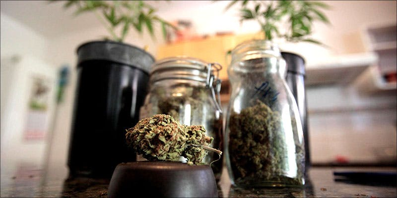 20 Weed In 5 10 Answers To The Most Commonly Asked Questions About Weed