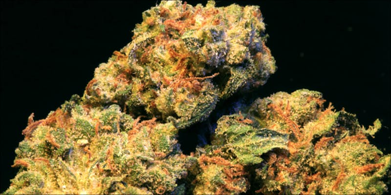 7 Strains That 5 10 Answers To The Most Commonly Asked Questions About Weed