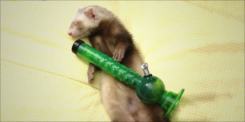 7 Things Youll 7 5 Genius Weed Smoking Accessories You Didnt Know You Needed