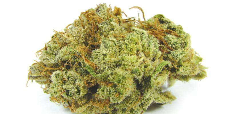 Blissful Wizard Weed; Blissful Wizard Cannabis Strain; Blissful Wizard Hybrid Marijuana Strain