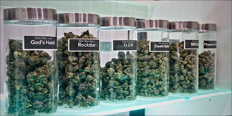 Cannabis Culture Raids 1new 10 Answers To The Most Commonly Asked Questions About Weed