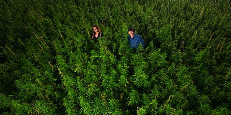 Inside huge CANNABIS 1 10 Answers To The Most Commonly Asked Questions About Weed