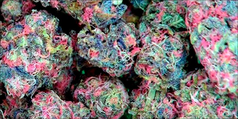 Is Pink Weed 2 10 Answers To The Most Commonly Asked Questions About Weed