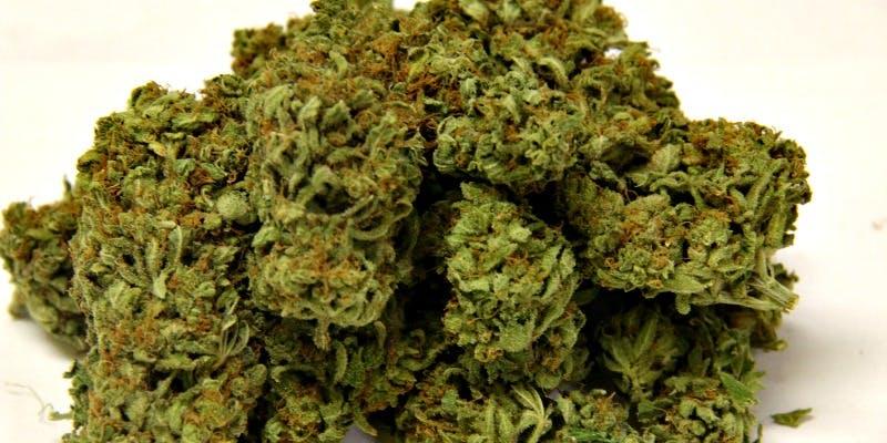 Liberty Haze Weed; Liberty Haze Cannabis Strain; Liberty Haze Hybrid Marijuana Strain