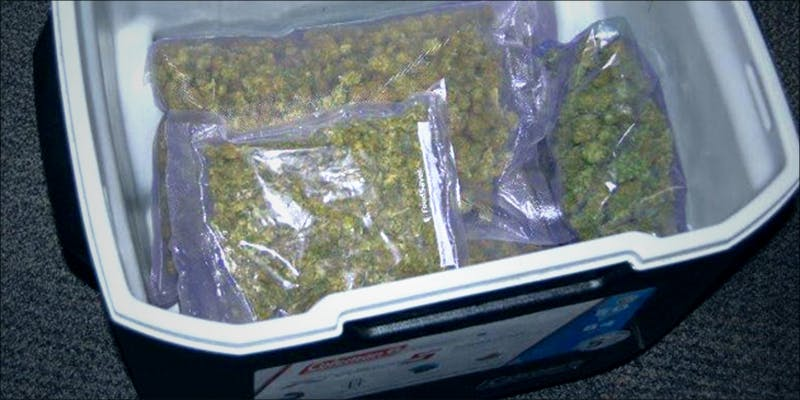 Marijuana Filled Cooler 1 Willie Nelson Loves Nick And Nate Diazs New Weed Strains
