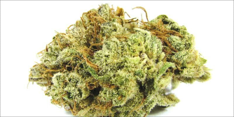 New Strains Roundup blissful 7 New Ways Cannabis Will Dominate Your Wellness Regime