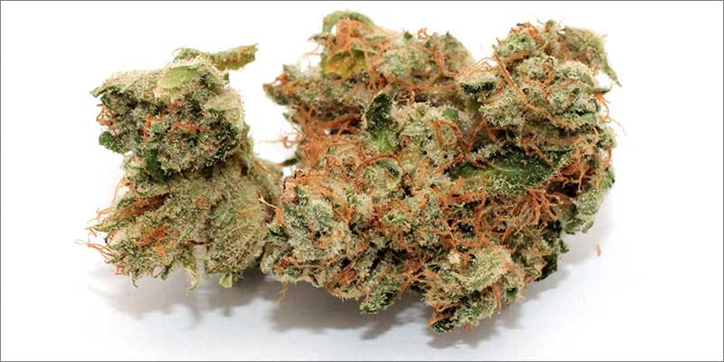 New Strains Roundup ewok 7 New Ways Cannabis Will Dominate Your Wellness Regime